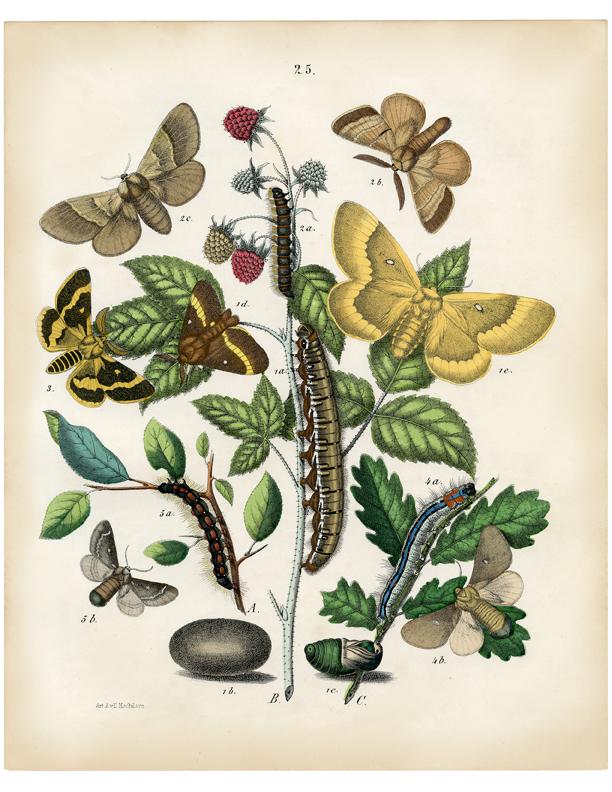 illustrazioni-piante