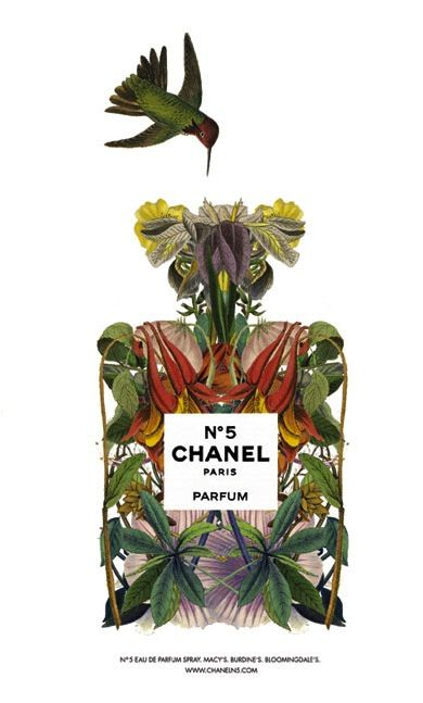 illustrazione-chanel