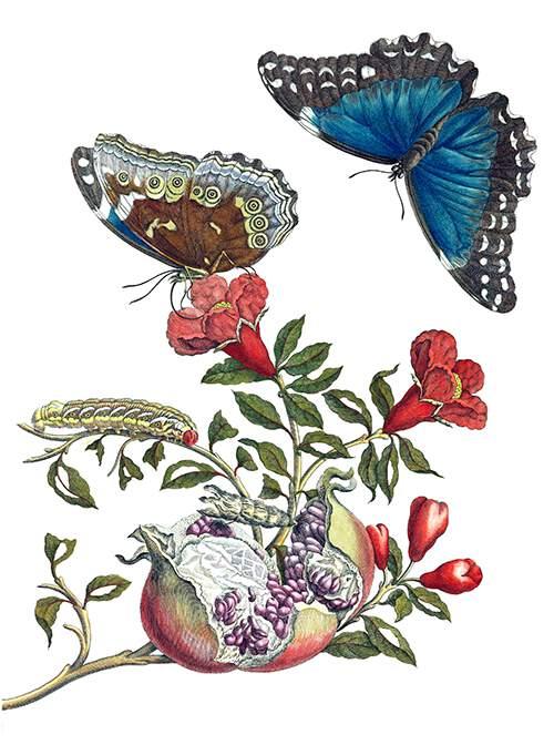 illustrazione-botanica